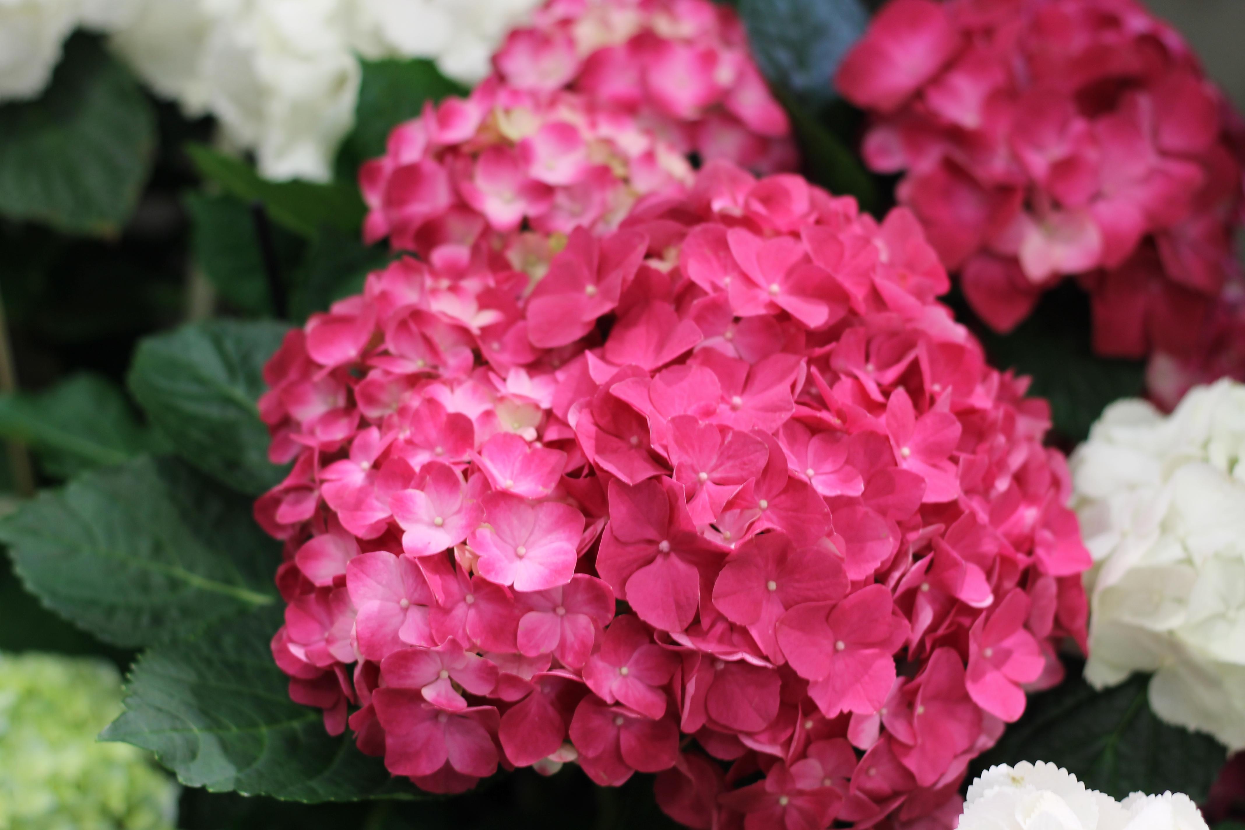 Fleurs 2000 - Photo n°2