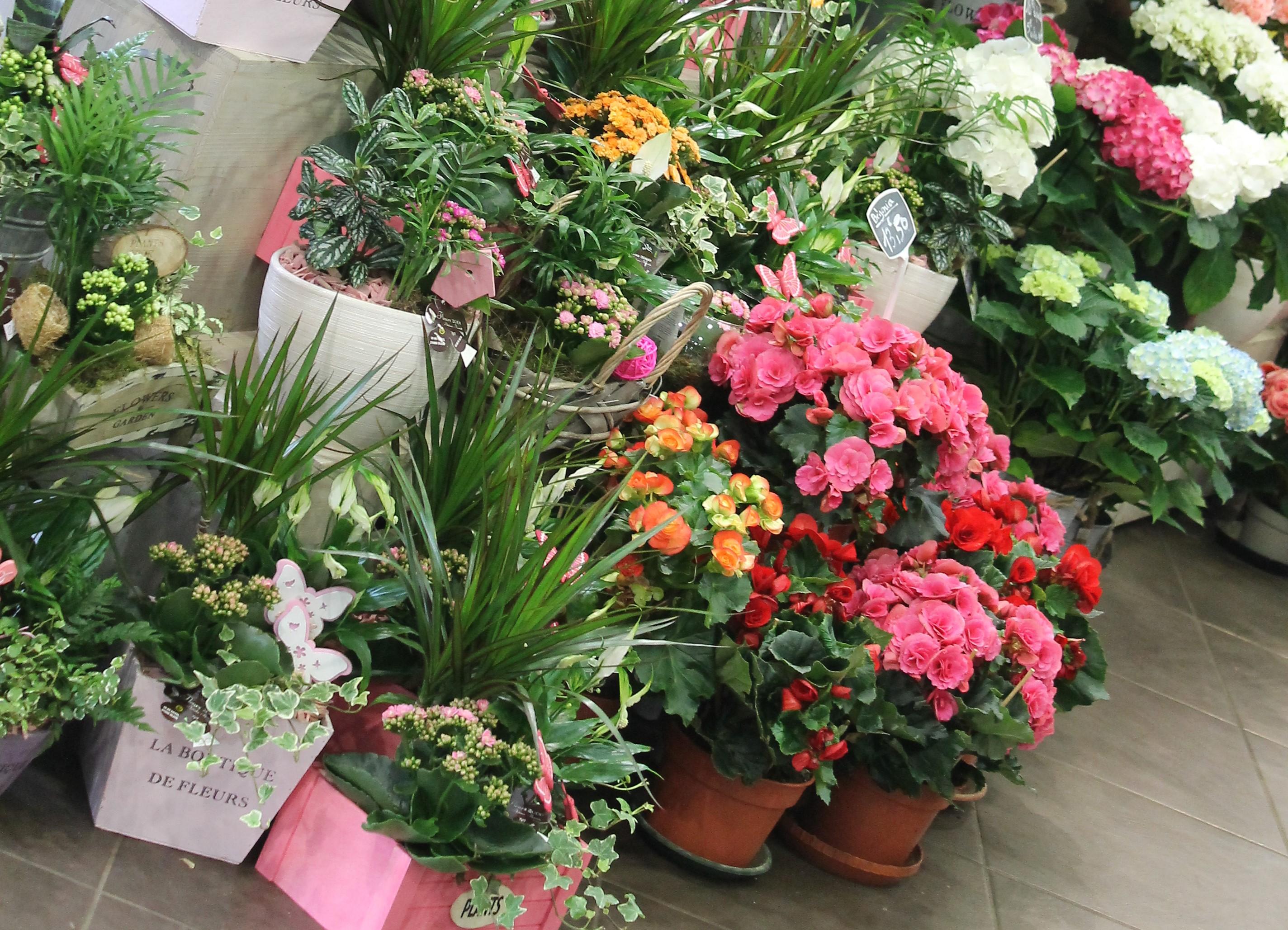Fleurs 2000 - Photo n°3